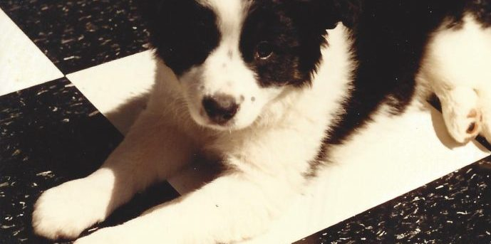 black and white puppy on black and white checkered floor