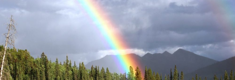 Rainbow over pine trees; the sky is cloudy
