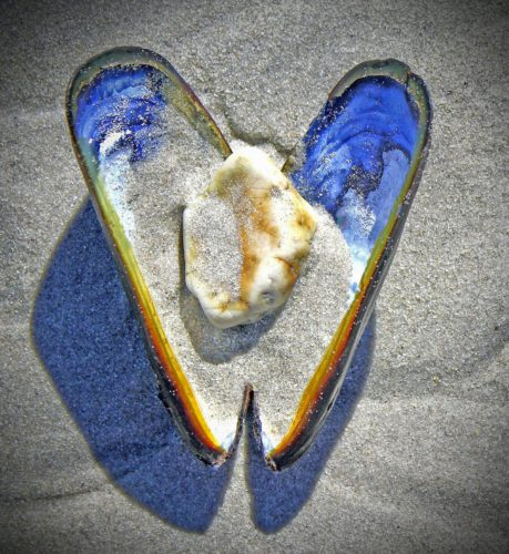 Mussel shell in the sand with sand and a white rock inside