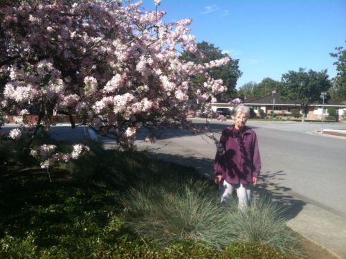 Mom at age 90 standing in the front yard of Hurst Avenue. The cherry tree her other gave her is to Mom's right, our left, and is in full bloom