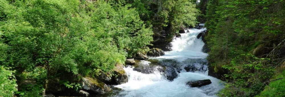River rushing over rocks in between a row of green trees on both banks