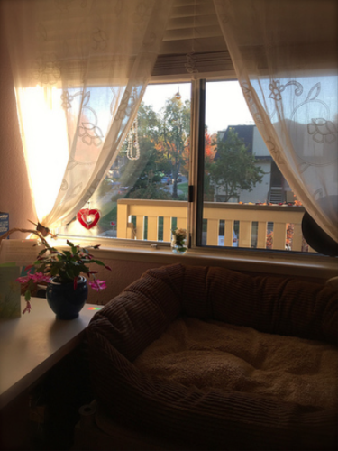 Tilly's window with the white lace curtains pulled back. A Christmas cactus with pink blooms is on the table on the left and a brown couch is in front of the window.