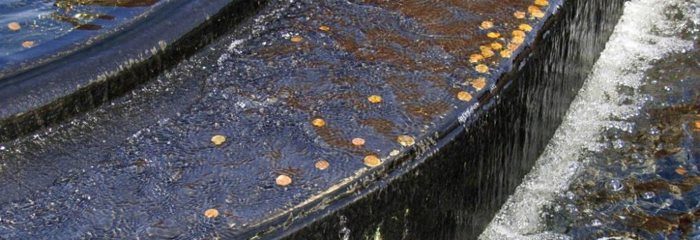 A brown stone ledge of a fountain with coins on it
