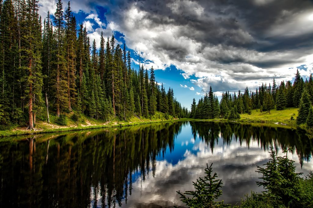 Lake Irene in Colorado with a row of tall pine trees on the left and right coming together in the distance in the middle of the photo. The white clouds and patches of blue sky are reflected in the water.