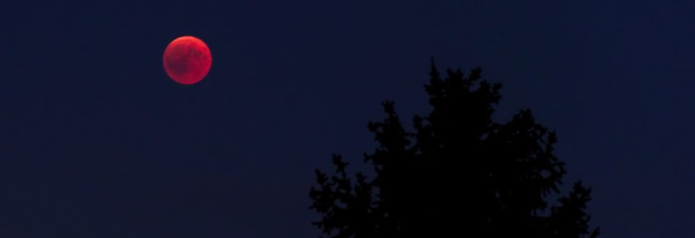 Blood red moon on the left against a dark blue sky. On the right, a silhouette of a tree
